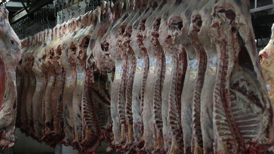 Resultado de imagen para Argentina volvió a exportar carne a Canadá