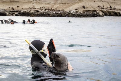 Snorkeling con lobos en Puerto Madryn