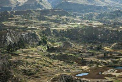 Fotoshock: El cóndor pasa, por el cañón del Colca